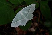 Een nog onbekende vlinder