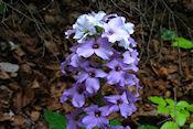 Mooie nog onbekende bloem