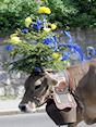 Koeien door Vallorbe