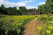 'Het Artiestenpad' in het Vlaams natuurreservaat Duinzoom Oosthoek