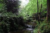 Gosford Forest Park
