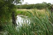 Brackagh Moss National Nature Reserve