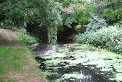 Newry Canal met zon