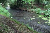 Newry Canal met regen