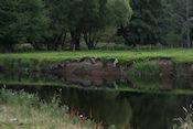 Wal met nesten van oeverzwaluwen langs de Tweed