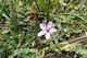 Onbekend bloemetje