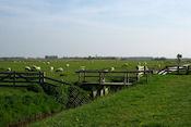Onderweg naar Vogelkijkhut Westerkolk