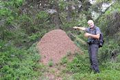 Grote Mierenhoop