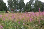 Camping Särna