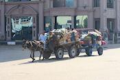 Ezeltje in Luxor