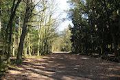 Het bos van de Kluiszenaar in het Spanderbos