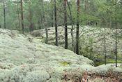 Onderweg in Björnnäsets naturreservat