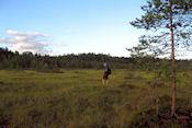 Wandeling bij het meer Tiilijärvi