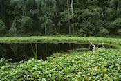 Uhkainlampi meertje onderweg tijdens wandeling