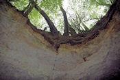 Les Grottes de la Falouze