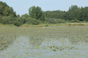 Vogelspotplek bij Iggelbo