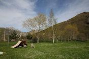 Camping Rio Luna in Sena de Luna
